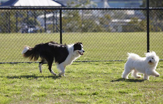 Proroga termini manifestazione di interesse per realizzazione e gestione area addestramento e sgambamento cani